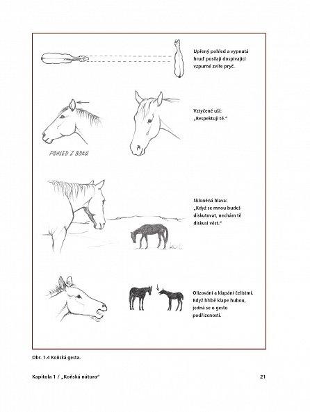 Náhled Průvodce nenásilným výcvikem koní