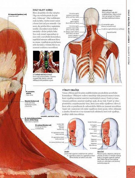 Náhled Lidské tělo - Ilustrovaný průvodce jeho strukturou, fungováním a poruchami
