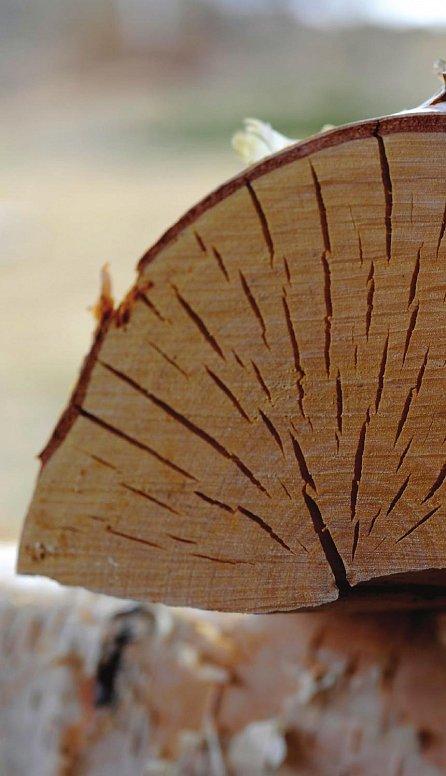 Náhled Dřevo - Vše o tom, jak dřevo sekat, skladovat a sušit – a o duši palivového dřeva