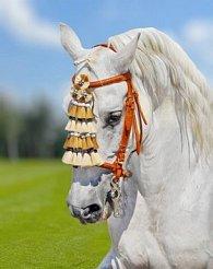 Pohlednice 3D kůň bílý na louce