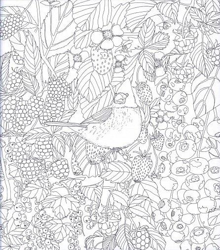 Náhled Dary přírody ovoce, zelenina a další plody - Omalovánky proti stresu