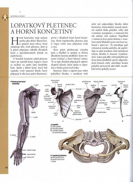 Náhled Anatomie - Ilustrovaný atlas