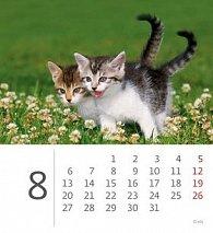 Kalendář stolní 2012 - Mini Kittens
