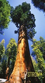 Kalendář 2012 - Stromy - nástěnný