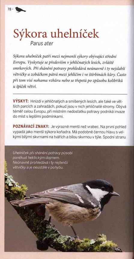 Náhled Ptáci z naší zahrady - Pozorování a určování nejčastějších ptačích obyvatel zahrad a parků