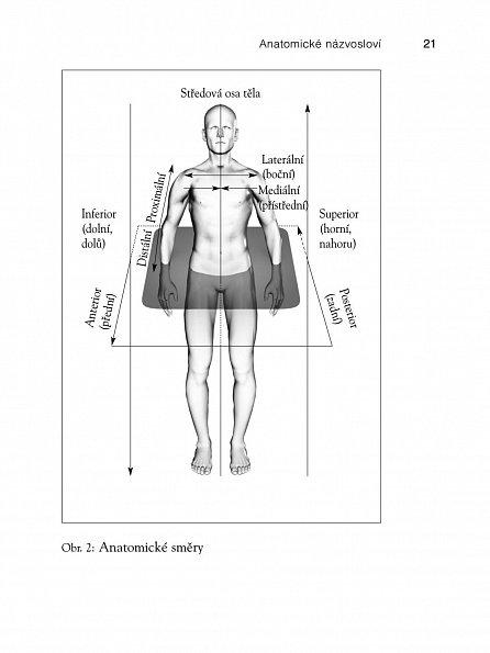 Náhled Anatomie těla v pohybu - Základní kurz anatomie kostí, svalů a kloubů