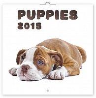 Kalendář 2015 - Štěňata - nástěnný (GB, DE, FR, IT, ES, NL)