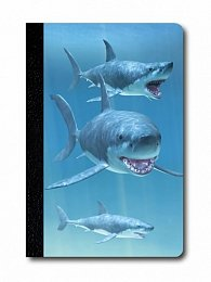 Zápisník - Úžaska - Žraloci