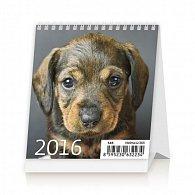 Kalendář stolní 2016 - Mini Puppies