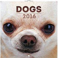 Kalendář nástěnný 2016 - Psi, poznámkový  30 x 30 cm