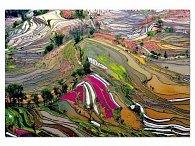 Puzzle Rýžová pole Čína 1000 dílků