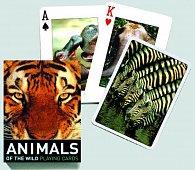 Poker Divoká zvířata