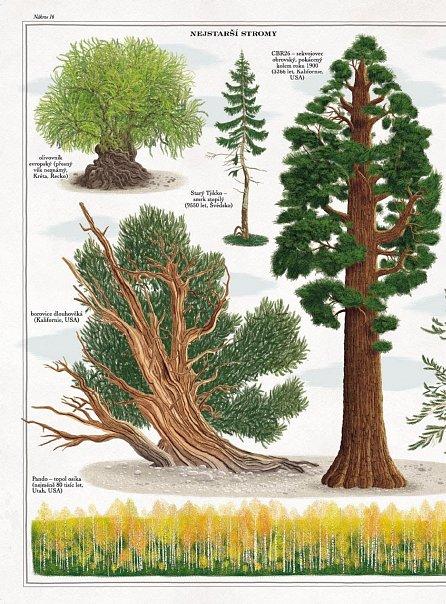 Náhled Stromy