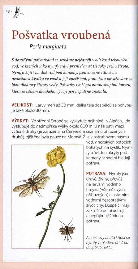 Náhled Hmyz - Pozorování a určování nejdůležitějších druhů našeho hmyzu