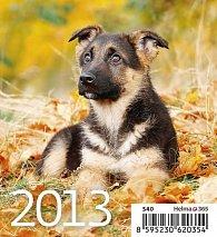 Kalendář stolní 2013 - Mini Puppies