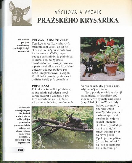 Náhled Pražský krysařík