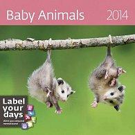 Kalendář 2014 - Baby Animals - nástěnný