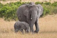 Pohlednice 3D slonice s mládětem