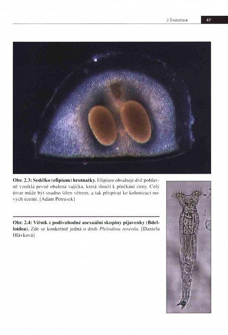 Náhled Rozmnožování z pohledu evoluce - Námluvy, sňatky a podvody v říši živočichů a rostlin