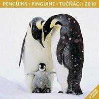 Tučňáci 2010 - nástěnný kalendář