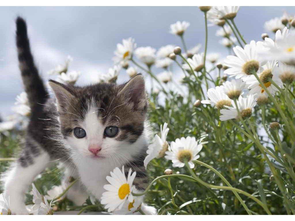 Pohlednice květinové kotě 3D